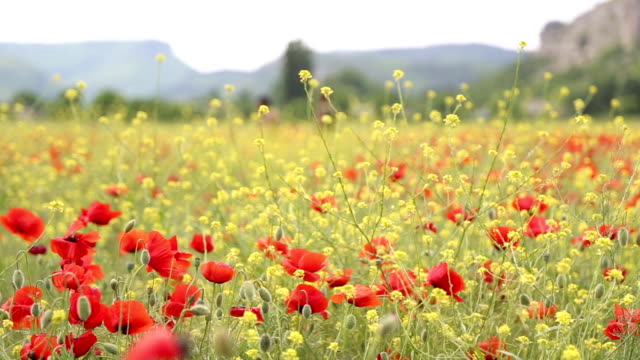 Spring blooming valley video