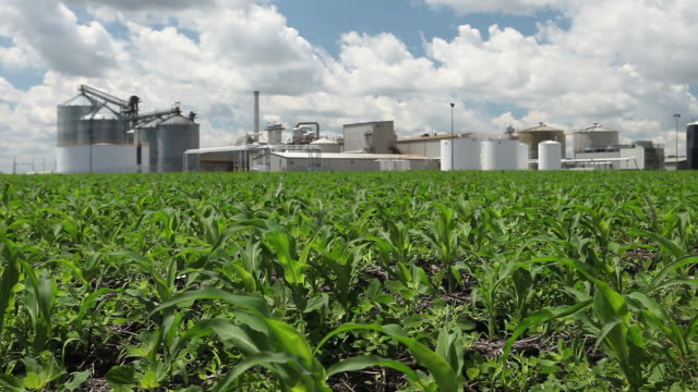 Spring Cornfield with Ethanol Plant in the Background A spring cornfield, with focus on the blowing leaves, leads to a slightly soft ethanol plant in in background. biofuel stock videos & royalty-free footage