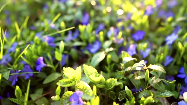 Spring flower field video