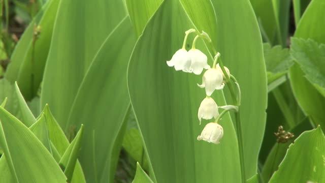 HD: Spring flower video