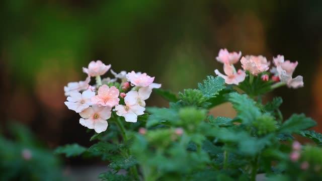 Spring Flowers Garden Rain Drops Spring Flowers Garden Rain Drops potted plant stock videos & royalty-free footage