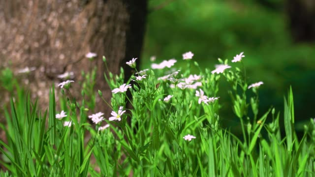 Spring flowers in a forest video