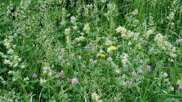 Frühling Blumen im Wald. – Video
