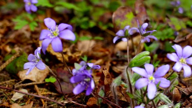 fiori di primavera, con slider - flora lussureggiante video stock e b–roll