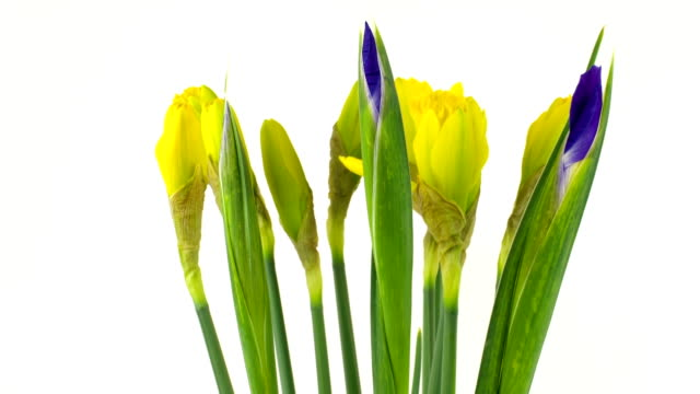 Spring Flowers Time Lapse video