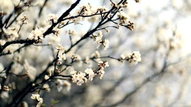 vidéos et rushes de fleurs de printemps - couleur saturée