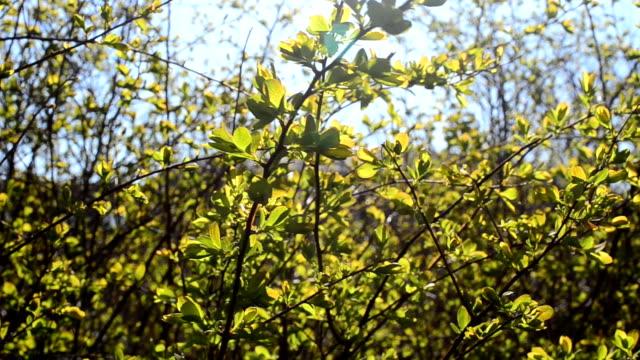 Spring foliage video