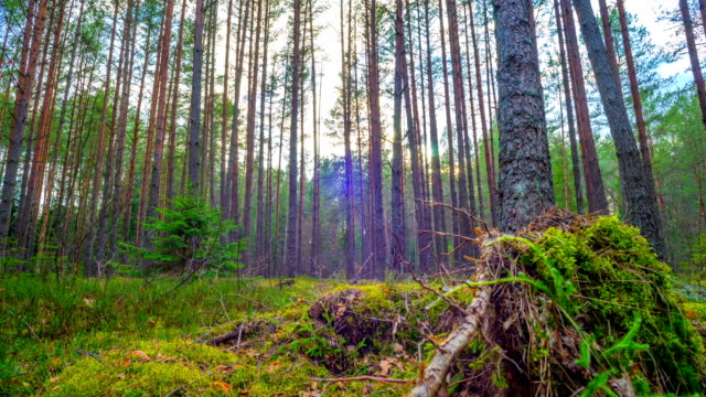 spring forest and the sun, time-lapse video