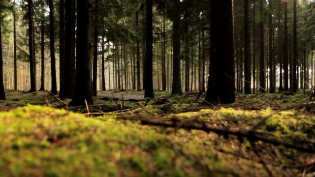 Spring Forest Floor video