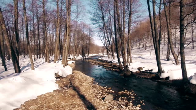 Spring forest in Bashkortostan Russia video