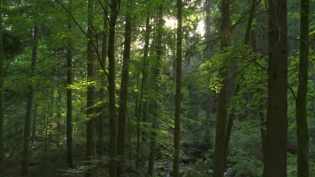 HD Wiosna lasu z światło słoneczne (Upływ czasu – film