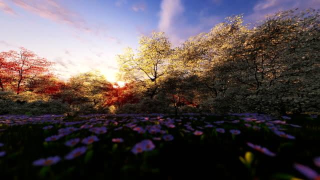 Spring forest, sunrise, camera panning video