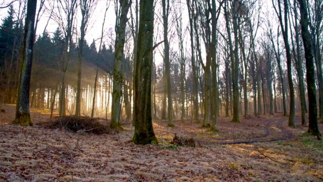 ds foresta di primavera - albero spoglio video stock e b–roll