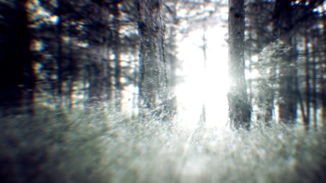 Spring forest (loopable) video
