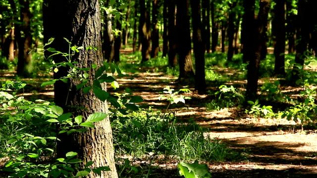 spring, forest, warm sunny day - wood texture filmów i materiałów b-roll