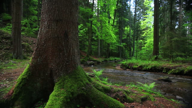 Spring Forest With Creek Dolly Shot video