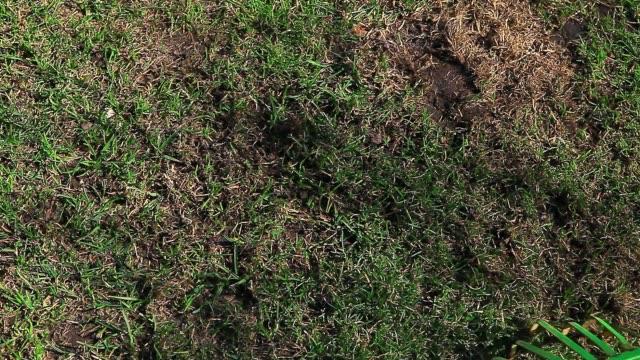 spring garden grass ground green rake hd footage - muschio flora video stock e b–roll