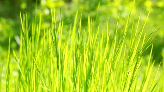 vidéos et rushes de herbe de printemps - couleur saturée