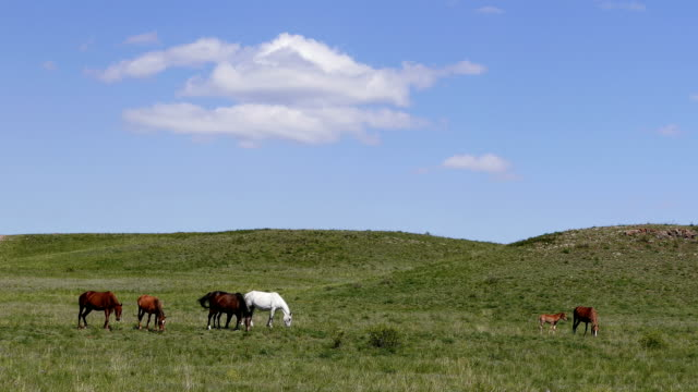 Spring Horses Steppe Clouds Meadow 4k