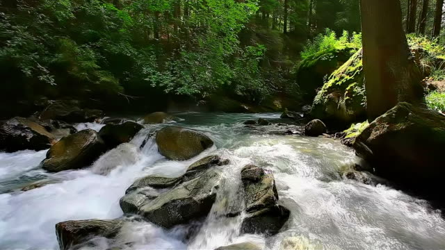 Spring in Great Smoky Mountains National Park video