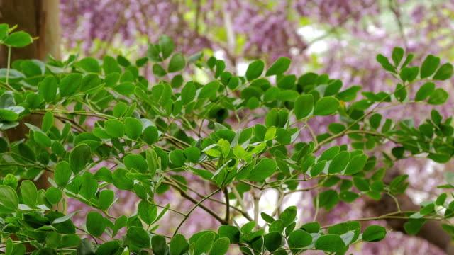 Spring Leaves video