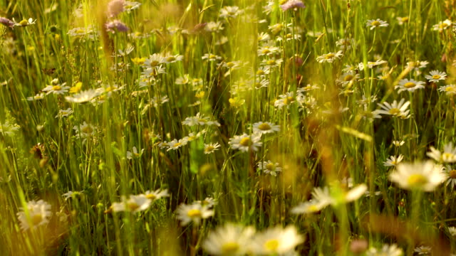 slo ミズーリの春の午後には、meadow - ローアングル点の映像素材/bロール