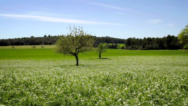 Spring meadow on Majorca video