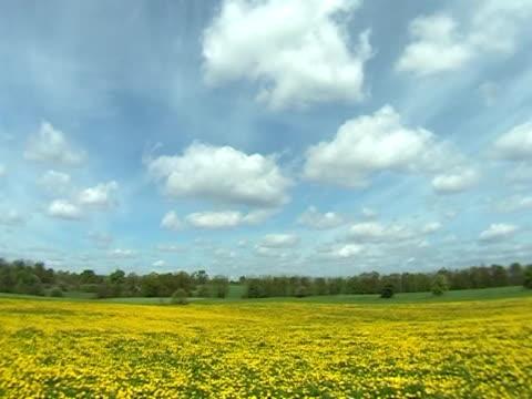 vídeos de stock, filmes e b-roll de primavera meadow - flor temperada