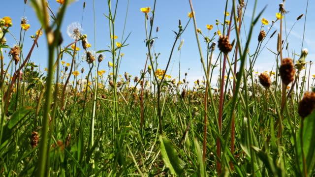 spring meadow - нивяник стоковые видео и кадры b-roll
