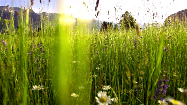SLO MO Spring Meadow video