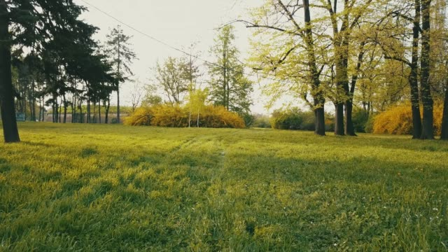 Spring meadow Video shot of green grassy field and trees in a public park. It's a calm place, perfect to get away from the city crowd. natural parkland stock videos & royalty-free footage