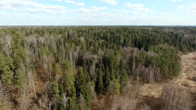 Spring mixed forest video