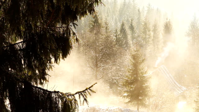 Spring morning in the mountains: melting snow drips down from the pine trees' branches video