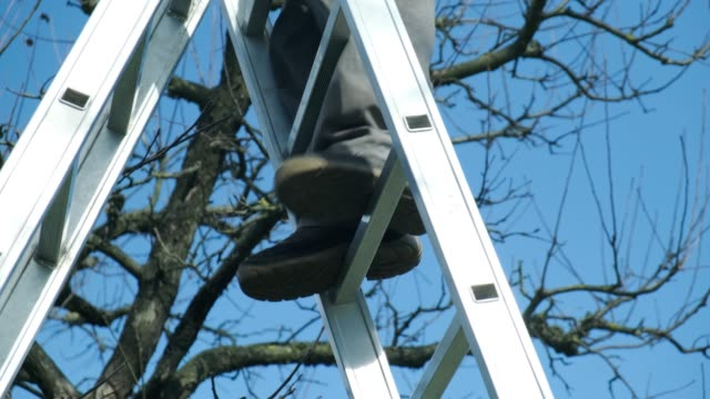 stockvideo's en b-roll-footage met lente snoeien van bomen - ladder