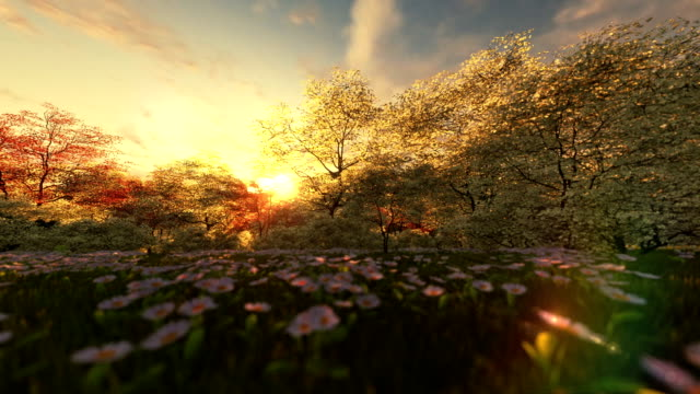 Spring scenery at sunrise, camera panning video