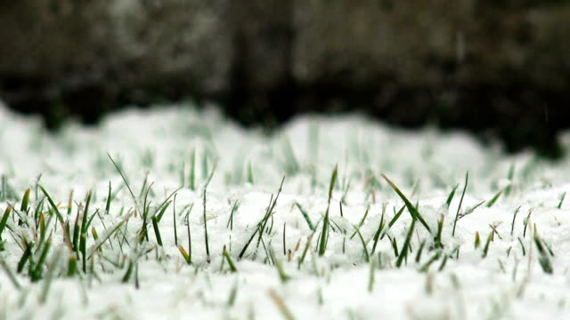 Spring Snow Falling On Grass Meadow, 4K winter background video