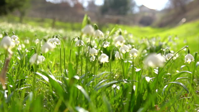 HD SUPER SLOW-MO: Spring Snowflakes In Meadow video