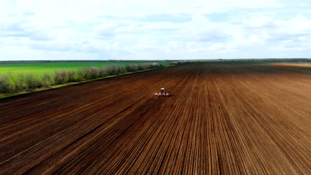 Spring sowing of sunflower on large plowed field