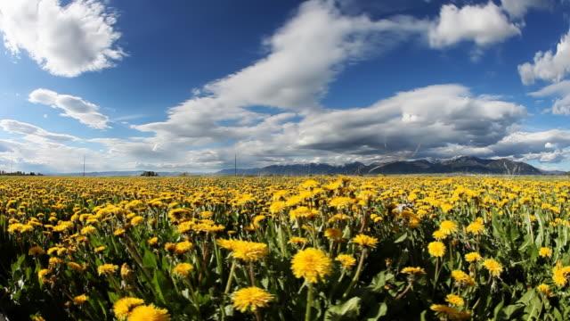 Primavera tiempo en la rural región de campo - vídeo