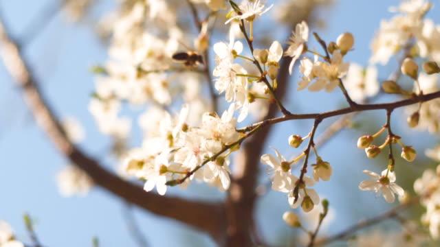 våren är här!!! - pollinering bildbanksvideor och videomaterial från bakom kulisserna