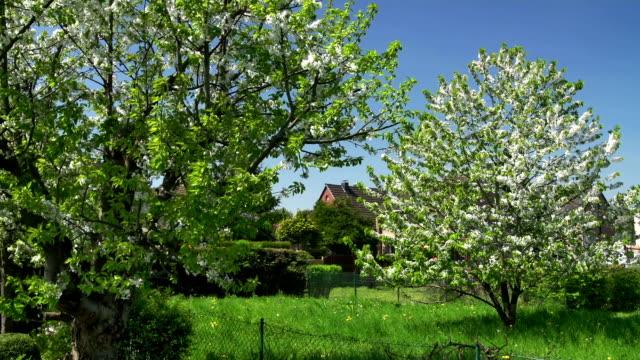 CRANE DOWN: Spring video
