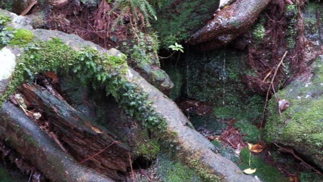 Spring water near the Jomon cedar in Yakushima