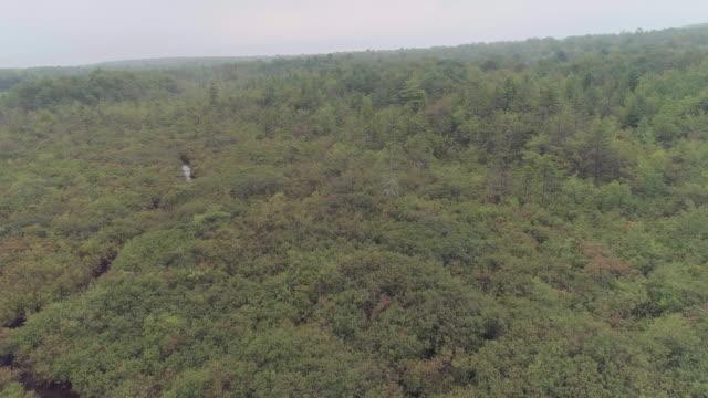 fjädrar på buskig träsk och skog, täckt av stark dimma. poconos, pennsylvania. antenn drönare video med framåt kamerarörelse. - poconobergen bildbanksvideor och videomaterial från bakom kulisserna