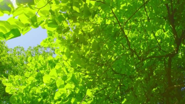 springtime impressions - beautiful foliage on a sunny day - obszar zadrzewiony filmów i materiałów b-roll