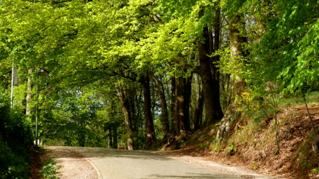 Springtime in Belgium : pavement path in green environment video