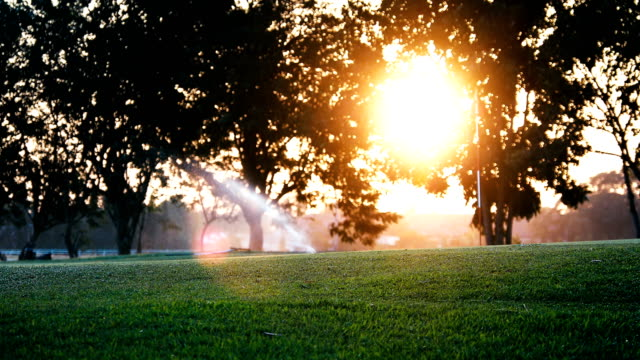 Sprinkler in watering green lawn of golf courses in the morning video