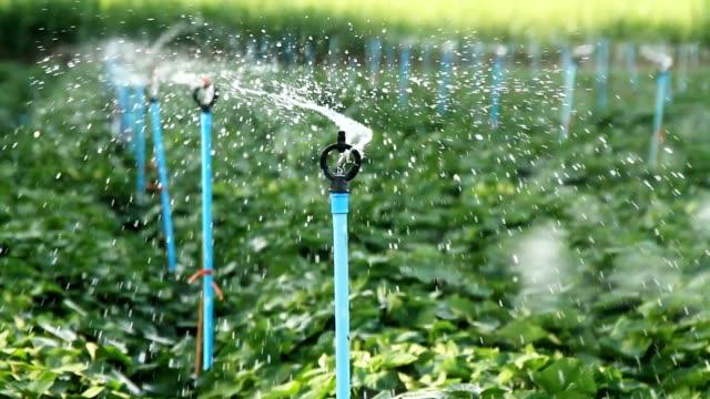 Sprinkler irrigation at farm video