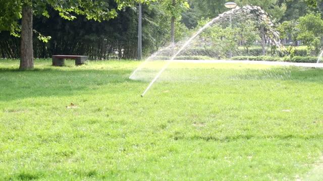Arrosage irrigation dans un parc public. Vert des arbres et l'herbe avec éclaboussure de l'eau dans une journée d'été. - Vidéo