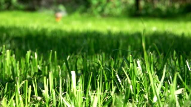 bahçede sprinkler sprey sulama otlar ve çimler - bahçe ekipmanları stok videoları ve detay görüntü çekimi