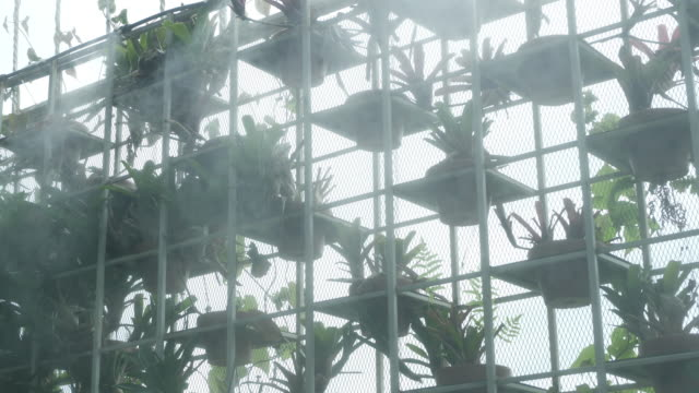 sprinkler spraying water in vertical garden
